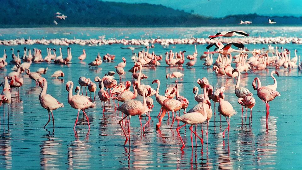 Le Kenya : un pays aux mille espèces animales